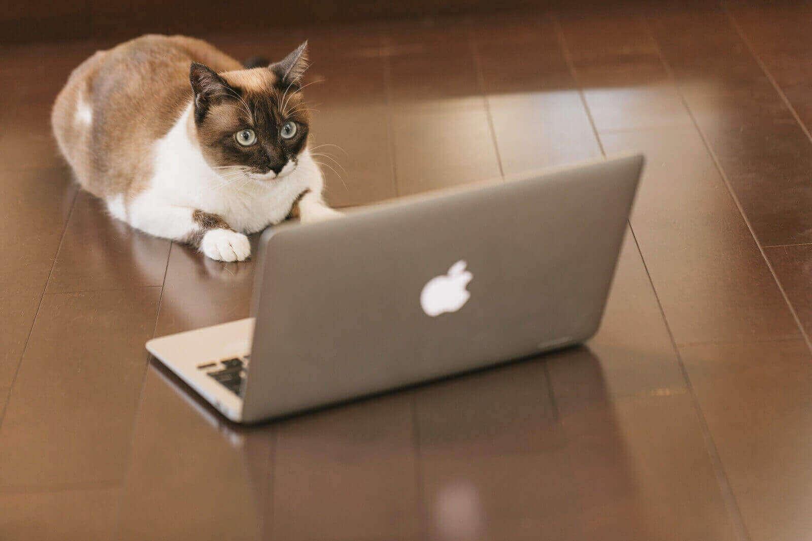 ノートパソコンと対面する猫
