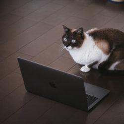 ノートパソコンと猫プログラマー